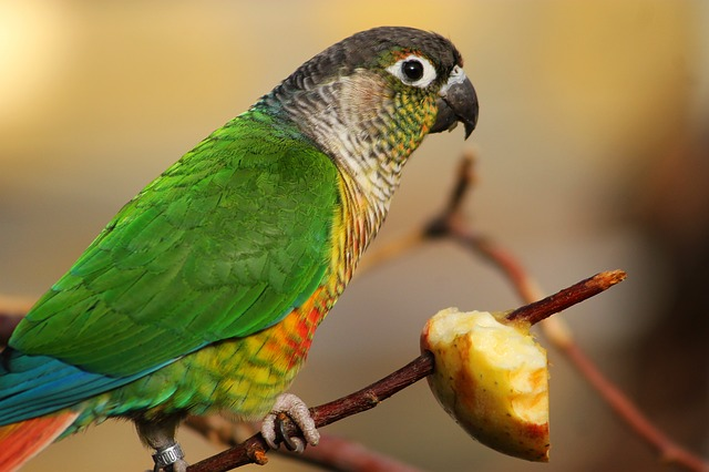 King and Parrot Motivational Story in Hindi