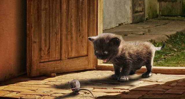 भूखा चूहा | Hungry Mouse and Cat Story in Hindi